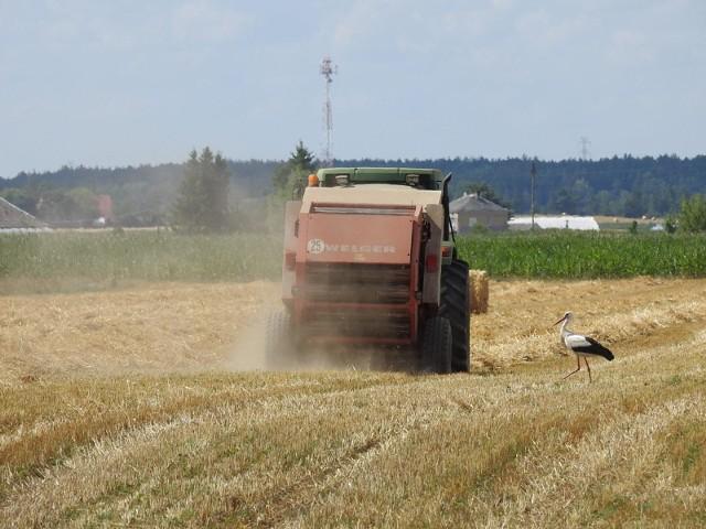 Młodzi rolnicy mogą się starać o dofinansowanie.
