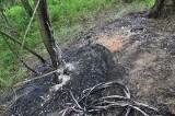 Wyciął kable telefoniczne, potem wypalał je w lesie