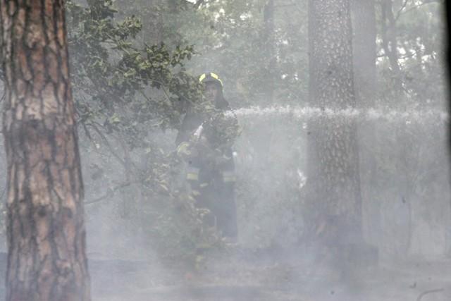 Pożar w lesie w Małej Nieszawce zauważono krótko przed godz. 15.00 w czwartek, 29 lipca