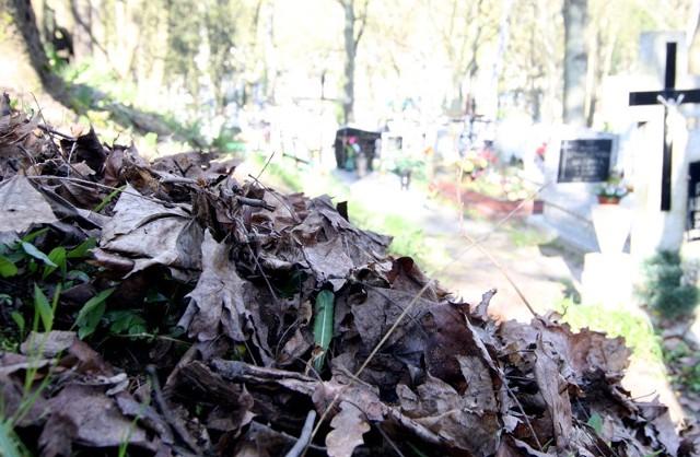 Liście leżące od ubiegłorocznej jesieni na Starym Cmentarzu.