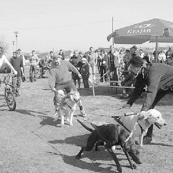 Od trzech lat najlepsze psie zaprzęgi z kraju i Europy spotykają się wiosną na błoniach w Paterku. W tym roku sfora ruszy do biegu 29 i 30 marca.