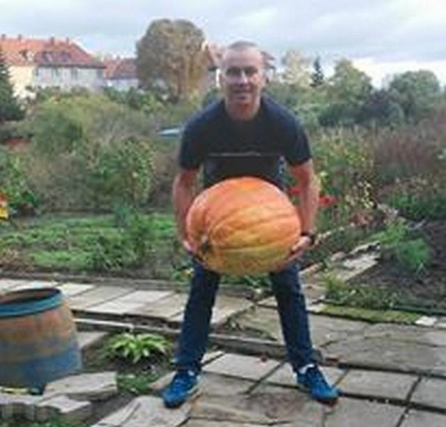 42-kilogramowa dynia urosła na działce naszego Czytelnika w Gorzowie. W obwodzie ma 112 cm i jak zapewnia pan Remigiusz, zostanie przeznaczona na rożne przetwory.Zobacz też: Prawdziwek gigant rósł na polu pod Zieloną Górą. Ważył prawie 2 kg! [ZDJĘCIA]