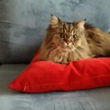 Światowy Dzień Kota na zdjęciach naszych czytelników. Oto nasi mruczący ulubieńcy. Koty są niesamowicie fotogeniczne!