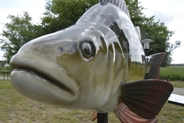 Skwierzyński park Ryb został otwarty w 2019 r. Inwestycja kosztowała 700 tys. zł