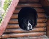 Właściciele zmarli, a sunia została sama. Pies był coraz bardziej zaniedbany. Szuka nowego domu