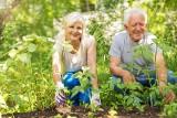 Papież Franciszek ustanowił Światowy Dzień Dziadków i Osób Starszych