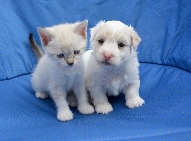 W serwisie OLX.pl można za darmo dostać także zwierzęta. Sprawdź naszą galerię i dowiedz się, jakie zwierzęta możesz dostać w okolicy zupełnie za darmo! Może właśnie u Ciebie znajdą nowy dom.Najciekawsze ogłoszenia z serwisu OLX.pl znajdziesz na kolejnych slajdach >>>