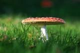 Te grzyby są trujące lub niejadalne. Uwaga! Lepiej ich nie zbierać. Ból brzucha to najmniejsze ryzyko. Zobacz jak wyglądają [ZDJĘCIA]