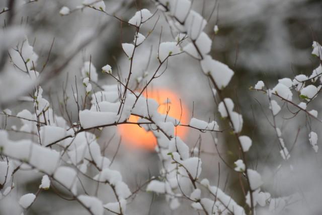 W woj. podlaskim, kiedy przyszły mrozy, na polach była  już okrywa śnieżna