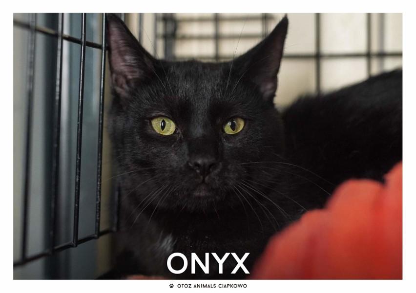 IMIĘ: Onyx (269/20)...