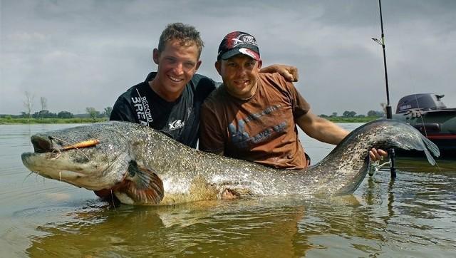 Krzysztof Rózga i Tomasz Miernik z ogromną rybą – sum mierzył 201 centymetrów.