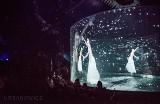W tym cyrku tygrys, rekin i słoń są wyłącznie wirtualne! Hologramowe zwierzęta zawitają do Gorzowa