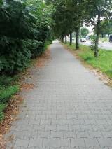 Stare liście szpecą chodniki w Kielcach. Drogowcy zapewniają, że sprzątali [ZDJĘCIA]