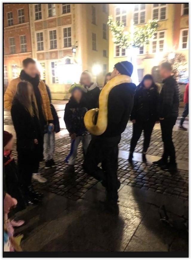 Mężczyzna spaceruje z wężami po Gdańsku zachęcając przechodniów do odpłatnego fotografowania się z gadem