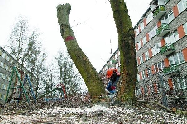 Ulica Ukośna: administracja wycina chore drzewa