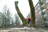 Przy ulicy Ukośnej administracja wycięła chore drzewa. Mieszkańcy protestowali.
