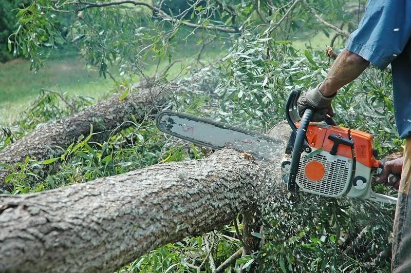 Opłatę za usunięcie drzew ustala się na podstawie stawki zależnej od obwodu pnia oraz rodzaju i gatunku drzewa