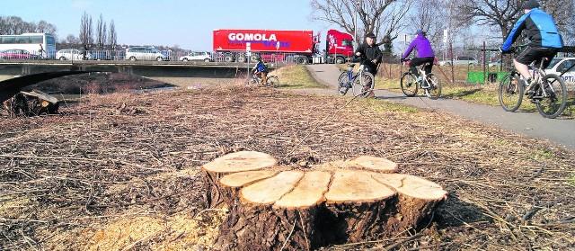 Brzegi Wisły w rejonie Skoczowa zostały pozbawione drzew i krzaków. Pszczelarzom, ale i mieszkańcom, to się nie podoba