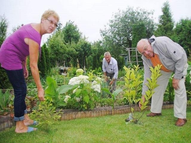 - Na pielęgnację roślin poświęcamy wiele czasu - mówią Teresa i Witold Melerscy oraz Kazimierz Jeliński (w tle)