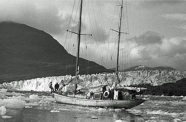 Śmiałyprzy lodowcu w fiordzie Seno Iceberg