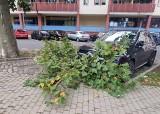 Na samochody przy pl. Batorego w Szczecinie spadają łamiące się gałęzie drzew. Nasi Czytelnicy alarmują!
