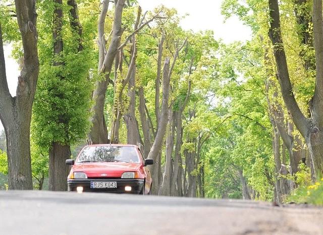 Do usunięcia pozostało jeszcze 90 kikutów drzew. To skutki zeszłorocznej nawałnicy.