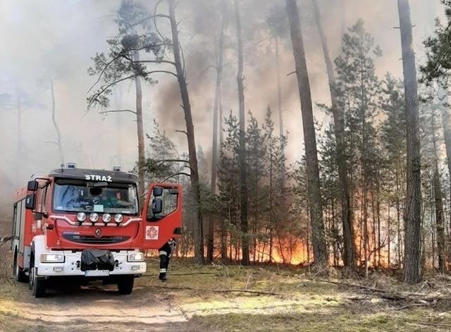Duży pożar wybuchł w Krzywańcu, pod Nowogrodem Bobrzańskim. Palą się trawy, torfowiska, lasy, pola i stogi