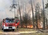 Duży pożar pod Nowogrodem Bobrzańskim. Akcja dogaszania trwa już drugi dzień