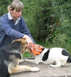 """Źle traktowany pies zachowuje się w charakterystyczny sposób: płaszczy się, warczy, unika ludzkiej ręki. Wiesława Rykowska ze schroniska """"Canis"""" na nowo uczy zwierzaki zaufania."""