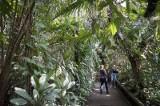 Targ śniadaniowy, park wodny, palmiarnia - co po muszli w parku Witosa? [zdjęcia]
