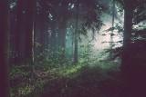 Bosy dwulatek przez pół nocy błąkał się po lesie pod Chełmem