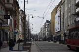Katowice sadzą nowe drzewa w centrum miasta. Klony polne i wiśnie
