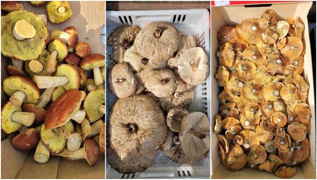 Sprawdź ceny grzybów z targowiska w Słupsku na kolejnych zdjęciach!