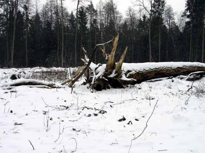Kleeberga czeka wycinka drzew