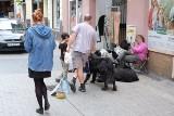 Czworonożni lokatorzy z Półwiejskiej. Czy deptak to dobre miejsce dla psów?