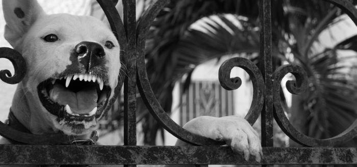 Choć uważane są za najlepszego przyjaciela człowieka psy...
