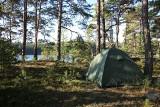 Zanocuj w lesie: nowe miejsca wyznaczone na Jurze. Program Lasów Państwowych startuje 1 maja