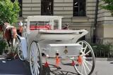 Dorożka bez woźnicy pędziła przez Stare Miasto. Urząd reaguje: odbiera dorożkarzowi licencję
