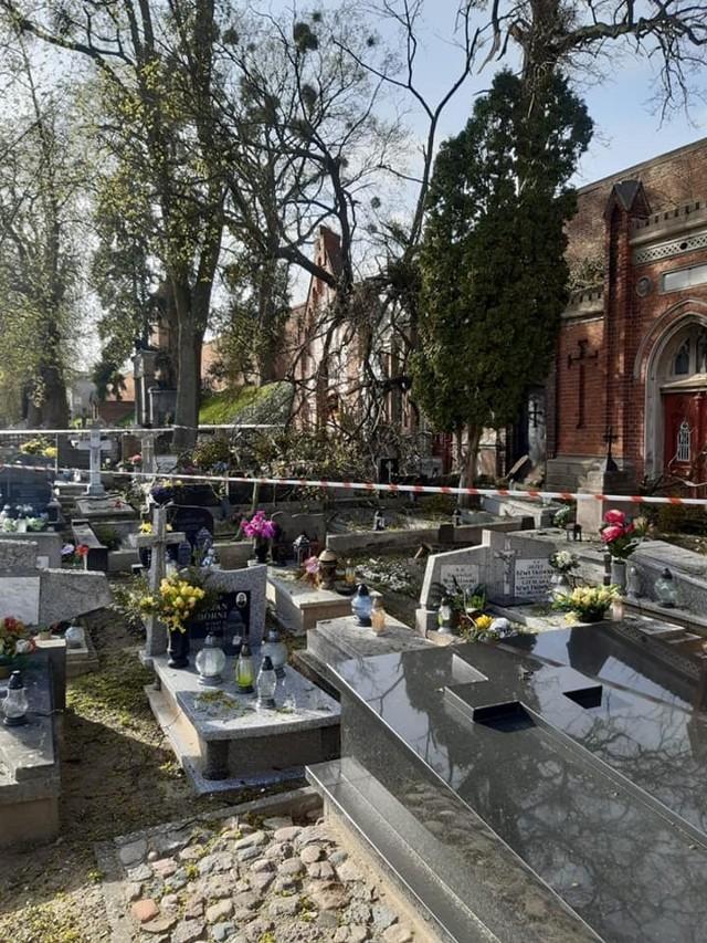 Na chełmińskim cmentarzu wiatr przewrócił drzewa, które uszkodziły pomniki