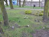 Kobiety zniszczyły kwiaty w parku. Dlaczego? [ZDJĘCIA]
