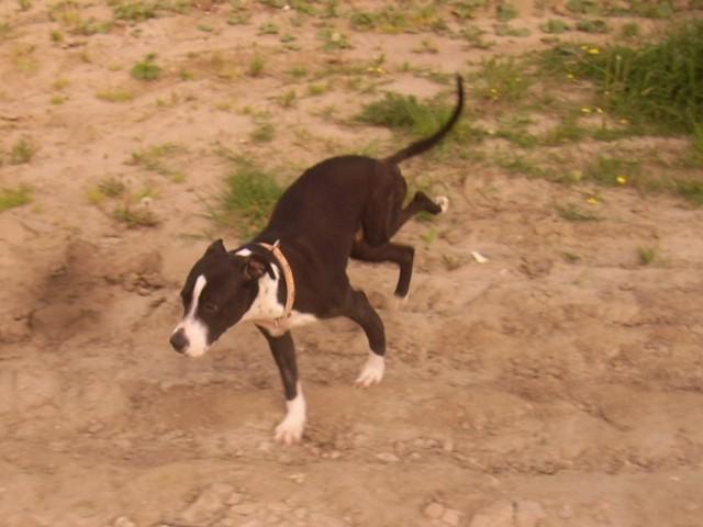 Tila dziś już w niczym nie przypomina cierpiącego psa, kiedy pod koniec lutego trafiła do schroniska