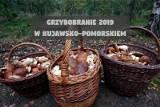 Gdzie na grzyby 2019? Tutaj trwa grzybobranie w Kujawsko-Pomorskiem [lista]