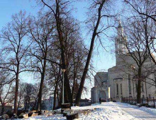 Policja stwierdziła, że wycinka drzew przy kościele św. Rocha to zabiegi pielęgnacyjne.