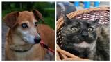 Czy te oczy mogą kłamać? Psy i koty w Białej Podlaskiej szukają nowego domu. Zobacz koniecznie
