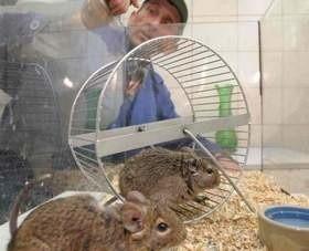 Do schroniska trafiają zwierzęta, które znudziły się ludziom. Tak być nie powinno. (fot. Daniel Polak)
