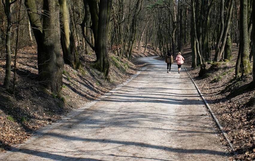 Otwarcie lasów od poniedziałku, z wyłączeniem infrastruktury towarzyszącej, takiej jak parkingi czy ścieżki edukacyjne – takie rekomendacje miał przedstawić premierowi przed rozpoczęciem Rządowego Zespołu Zarządzania Kryzysowego minister środowiska Michał Woś