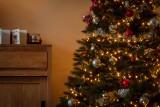 """Co zrobić z choinką po świętach? Miasto ma pomysł jak """"zagospodarować"""" żywe drzewka z naszych mieszkań"""