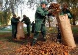 Walka ze szrotówkiem w Lublinie. Zgrab opadłe liście kasztanowca (ZDJĘCIA)