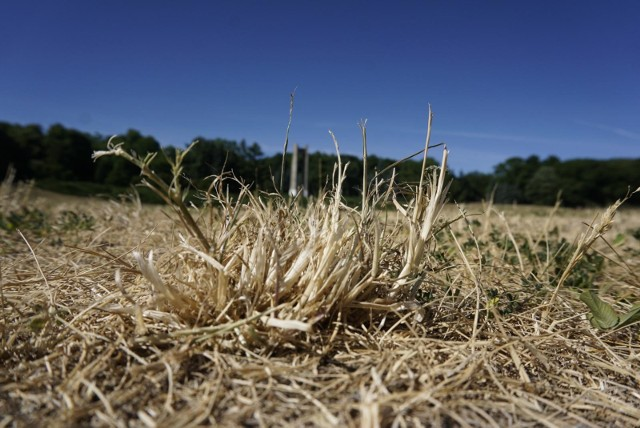 Suszą rolniczą zagrożony jest cały kraj