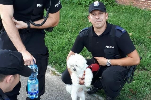 Kierowca zostawił swojego psa w nagrzanym samochodzie we wtorek (24 lipca) w Toruniu. Czworonoga uratowali policjanci, których wezwał przechodzień.